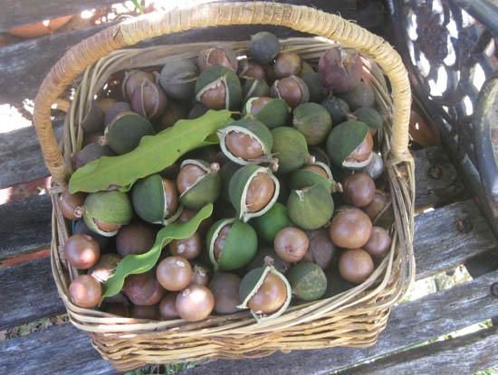 корзина с орехами макадамии