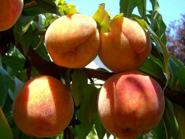 Топ 20 низкокалорийных продуктов: персики