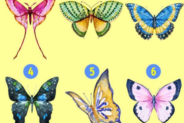 тест. выберите бабочку