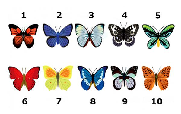 тест: выберите бабочку