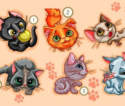 тест: выберите кошку