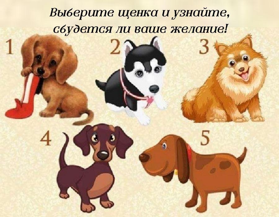 тест: выберите щенка