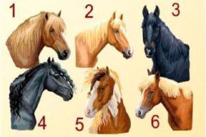 тест: выберите лошадь