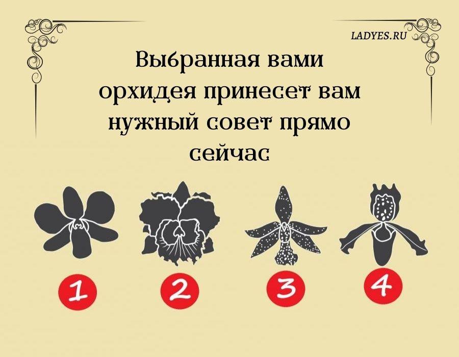 Выбранная вами орхидея принесет вам нужный совет прямо сейчас