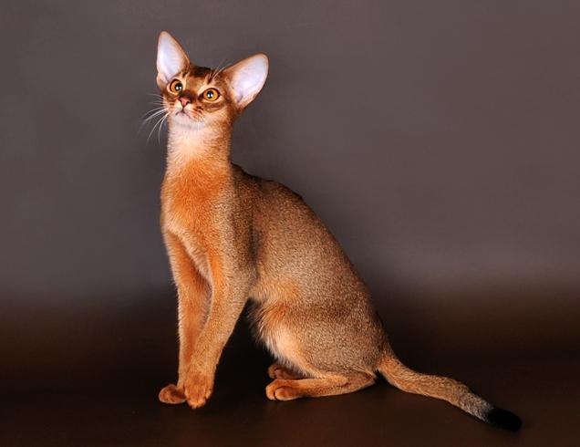 психологические тесты по картинкам:  выбранный кот расскажет вам, какая черта вашего характера вредит личным отношениям