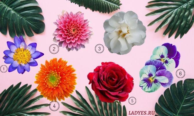 Тест: выберите цветок и посмотрите, что он говорит о вашей женственности!